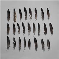Pheasant Natural Feathers Approx 10-15cm 25pcs/ set