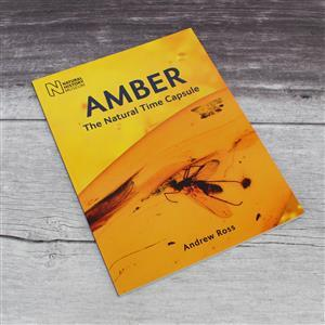 Amber The Natural Time Capsule by Andrew Ross
