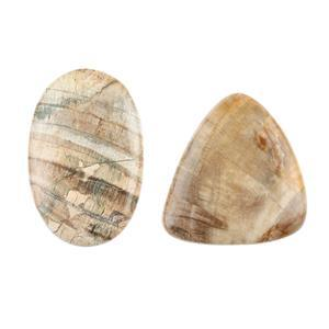 Petrified Wood Cabochons