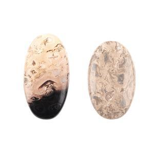 Fossilized Palm Root Agate Cabochons