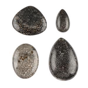 Fossilized Coral Cabochons