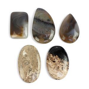 180cts Fossilized Palm Root Agate Multi Shape Cabochons Assortment.