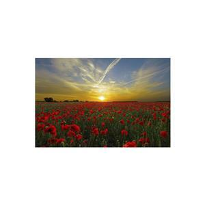 Field of Rememberance Diamond Art Kit - 40x60 Square Drills
