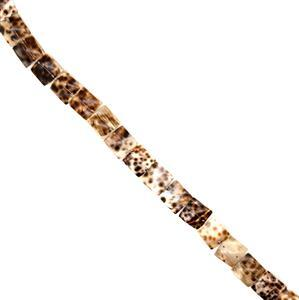 Leopard Print Shell Squares Approx 20mm, 38cm Strand