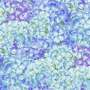 Henry Glass's Packed Hydrangeas Blue from Hydrangea Birdsong Range. 0.5m